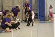 Flyball team in action